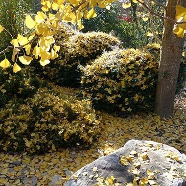 square leaves