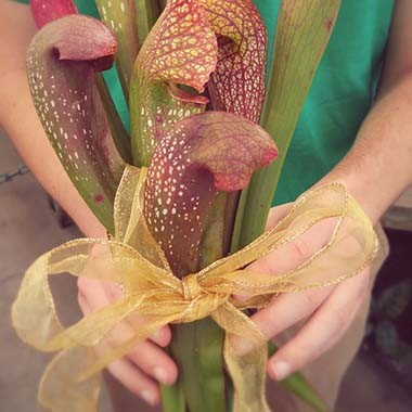square sarracenia bouquet