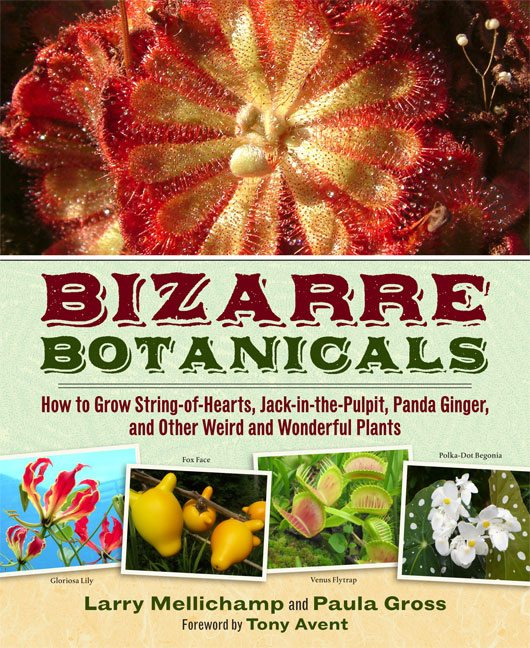 Bizzare Botanicals