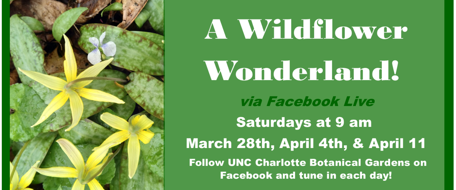 WIldflower Wonderland FB Live Soliloquy