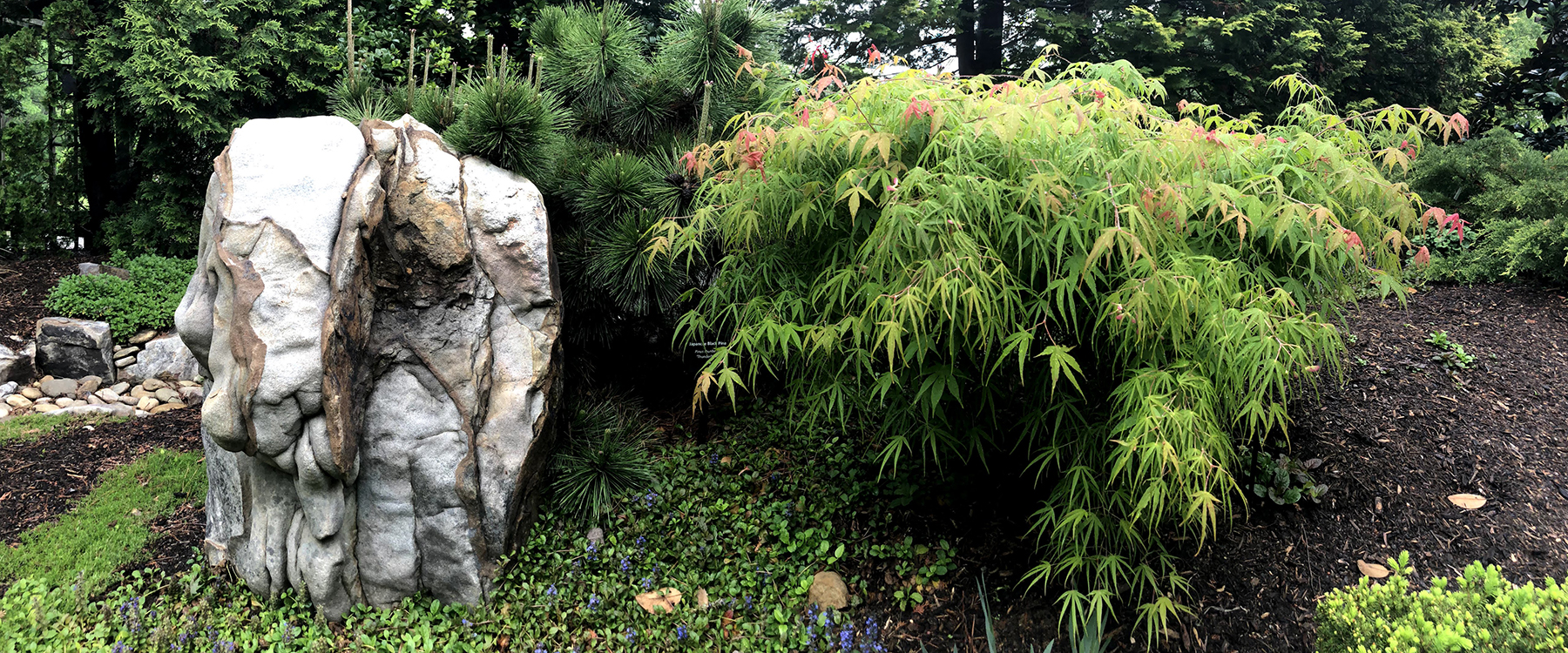Asian Garden Rock And Maple