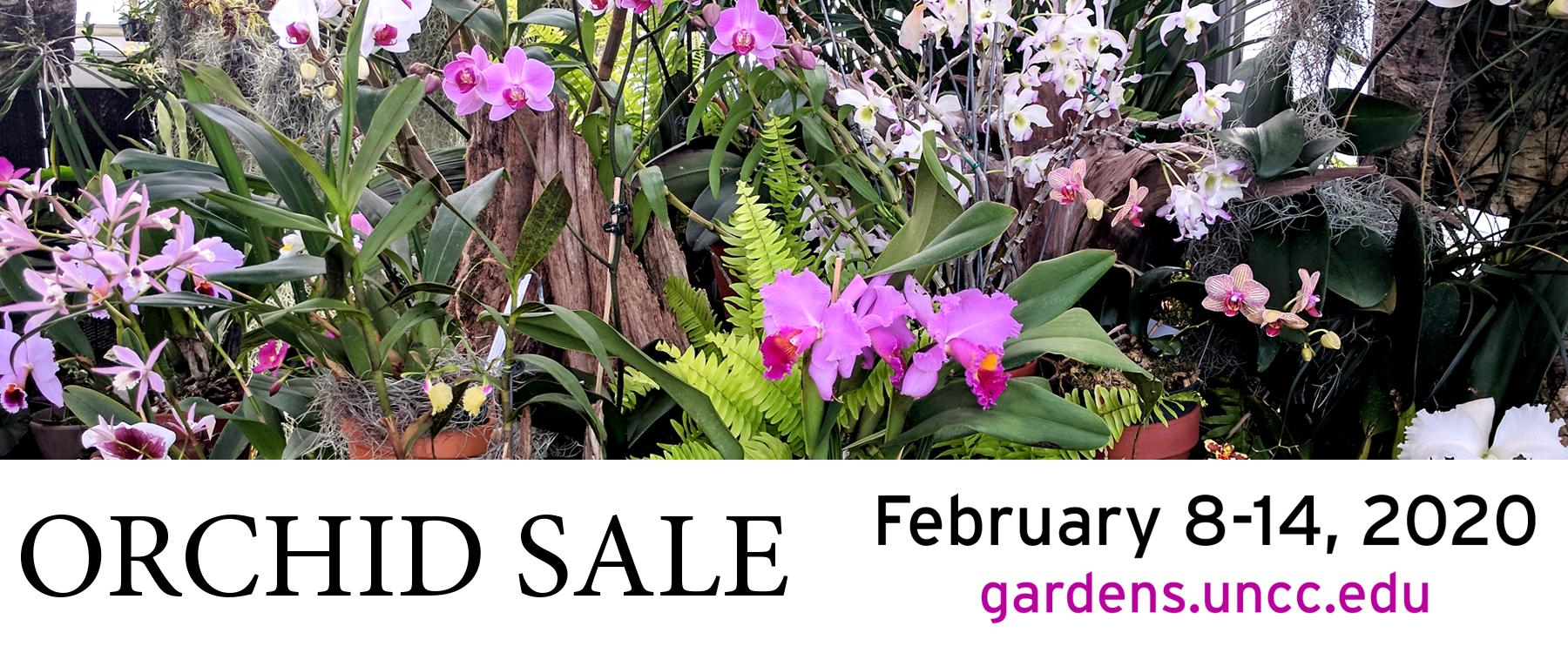 orchid sale banner