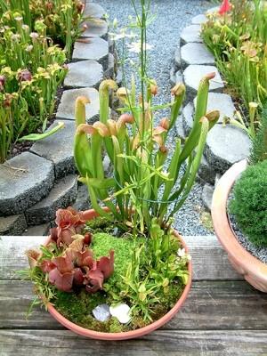 Bog Dish Garden