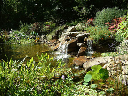pond-in-summer
