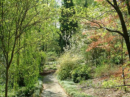 harwood-path-scene