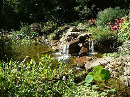 pond-in-summer