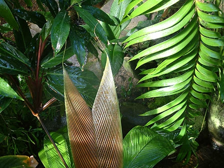 Giant leaves in conservatory